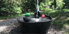 El refrescante baño de Takoda, el oso amigo de todos