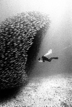 cd3b93a35d0 diving through a school of fish~ underwater photography