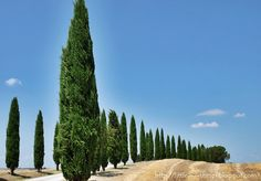 little----things.blogspot.com Amore a prima vista / Love at first sight / - Val d'Orcia, Cypresses in Tuscany, summer in Italy,