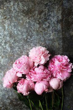 Verliebt in Pfingstrosen - In Love with Peonies Pfingstrosen - My Flower, Fresh Flowers, Pink Flowers, Beautiful Flowers, Cactus Flower, Exotic Flowers, Yellow Roses, Pink Roses, Deco Floral