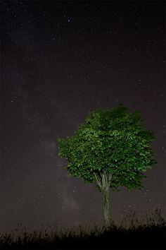 Photograph A Midsummer Nights Dream by Francesco Gola on 500px