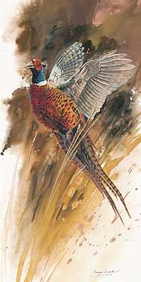 Flushed Pheasant Art Print by Janene Grende|WildWings