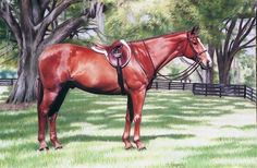 Pastel horse drawing by Debi Fitzgerald