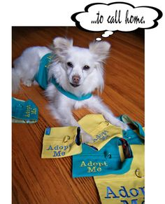 "Sew ""adopt me"" vests for shelter dogs"