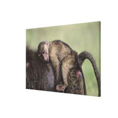 =>>Cheap          Masai Mara National Reserve Gallery Wrapped Canvas           Masai Mara National Reserve Gallery Wrapped Canvas lowest price for you. In addition you can compare price with another store and read helpful reviews. BuyThis Deals          Masai Mara National Reserve Gallery W...Cleck Hot Deals >>> http://www.zazzle.com/masai_mara_national_reserve_gallery_wrapped_canvas-192425847126274261?rf=238627982471231924&zbar=1&tc=terrest