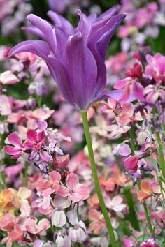 21 Best Flowers That Start With T Images Beautiful Flowers Exotic