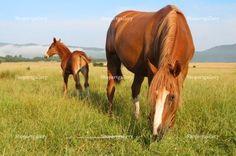 Two horses © Anton Zagorulko