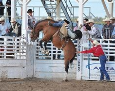 Caldwell Night Rodeo - Home