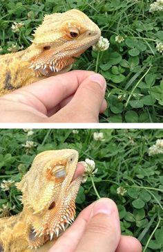 32 magnifiques photos de reptiles 6