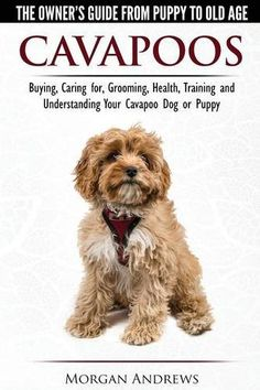 Cavapoos - The Owner's Guide From Puppy To Old Age - Buying, Caring for, Grooming, Health, Training and Understanding Your Cavapoo Dog or Puppy by Morgan Andrews http://www.amazon.com/dp/191067706X/ref=cm_sw_r_pi_dp_u0.nwb1XFT4H6