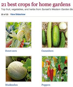 21 best crops for home gardens- except for blueberries- Blueberries are difficult to grow in the desert