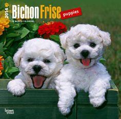Bichon Frise Puppies Calendar 2014 $14.95