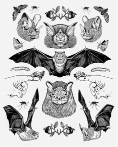 Decorative illustration exploring different breeds of bats and their feed. © Copyright of Louise Zergaeng . Tattoo Drawings, Art Drawings, Bat Tattoos, Tattoo Art, Future Tattoos, Traditional Tattoo, Blackwork, Art Inspo, Art Reference