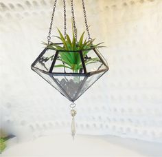 Hey, I found this really awesome Etsy listing at https://www.etsy.com/listing/173309978/terrarium-water-glass-terrarium