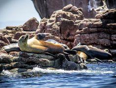 Isla Partida, Baja California Sur, México