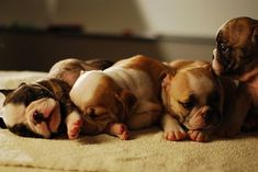 Sleeping pups.