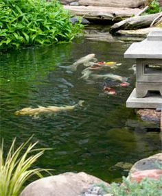 1000 Images About Pond Maintenance Tips On Pinterest Ponds Gardening And Water Garden