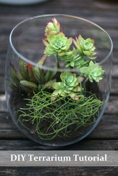 DIY Terrarium pick out the perfect glass item at Goodwill and make mom a lovely terrarium - longer lasting than flowers :o)