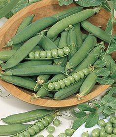 Burpee Seeds - Pea, Burpeeana Early