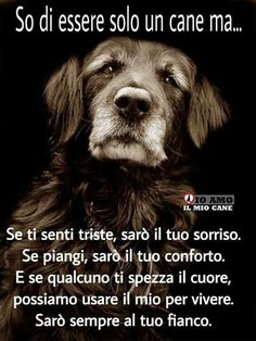 So di essere solo Animals And Pets, Funny Animals, Cute Animals, Beautiful Creatures, Animals Beautiful, I Love Dogs, Cute Dogs, Hachiko, Teen Girl Poses