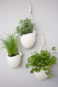 rope porcelain hanging planters is part of Wall mounted planters Add some vertical greenery to any wall in your home The hanging ceramic planter hangs from twisted cotton rope High fired porcelai - Plant Wall Decor, Indoor Plant Wall, Indoor Plants, Indoor Gardening, Hanging Plant Wall, Kitchen Gardening, Kitchen Herbs, Container Gardening, Organic Gardening