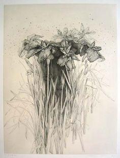 Shinji Ando  Irises