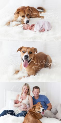 family portrait with dog, newborn and dog poses, newborn photo sessions with pets, natural light portrait studio, simple newborn photography, newborn photo pose ideas © Dimery Photography 2013