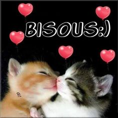 Bisous :) chats chaton bisous mignon Plus - Christian Lavigne - - - Animals And Pets, Baby Animals, Cute Animals, Kittens Cutest, Cats And Kittens, Bisous Gif, Yoga Words, Happy Friendship, Photo Chat