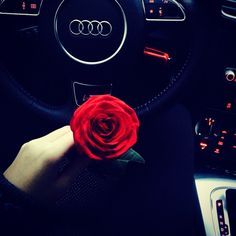 #Audi #Love #red #rose