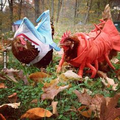 My aunt got Halloween costumes for her chickens... - 9GAG