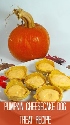 No bake Pumpkin Cheesecake Dog Treat Recipe. An irresistible treat your dog will love for Thanksgiving and the Holidays! Puppy Treats, Diy Dog Treats, Healthy Dog Treats, Dog Biscuit Recipes, Dog Treat Recipes, Dog Food Recipes, Baby Recipes, Homemade Dog Cookies, Homemade Dog Food