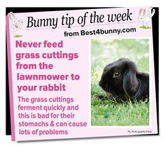 Bunny tip of the week... Find all of our tips here https://www.pinterest.com/best4bunny/top-bunny-tips-best4bunny/ …