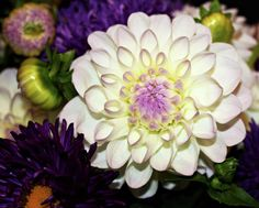 Dahlia Bouquet Photograph