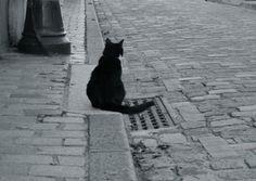 paris cat  パリ 都市 猫  chat