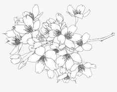 Drawing flowers line drawing flowers line line drawing mellow image and beautiful flowers drawing video Beautiful Flower Drawings, Flower Line Drawings, Beautiful Flowers, Art Drawings, Drawing Flowers, Tulip Drawing, Flower Graphic Design, Japanese Blossom, Cherry Blossom Art