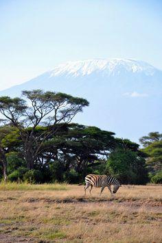 Гора Килиманджаро в тумане. Танзания. Африка. Фото