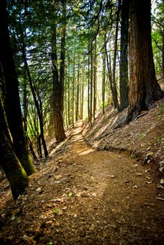 Hike the Oregon part of the Pacific Crest Trail