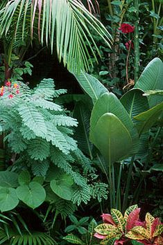 Looking for a popular Common Tropical Houseplants to grow in your house? Our guide will help you to choose the plants that attractiveness to your home. Patio Tropical, Tropical Garden Design, Tropical Landscaping, Backyard Landscaping, Backyard Ideas, Garden Ideas, Tropical Style, Tropical Flowers, Tropical Plants