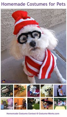 DIY Costumes for Pets - a huge gallery of homemade Halloween costumes!