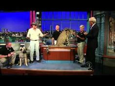 Kurdish Kangal &.African Cheetah Video from David Letterman Show. http://www.herbfest.net/pets/dogs/400-how-kangal-dogs-can-protect-natural-predators-including-the-african-cheetah-video