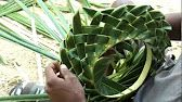 Thomas and San Maarten with family and friends and shows everyone on the beach how to make a samoan basket from palm leaves. Flax Weaving, Basket Weaving, Deco Floral, Arte Floral, Coconut Leaves, Leaf Crafts, Palm Fronds, Palm Sunday, Leaf Art