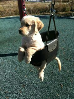 Having a puppy would definitely be a life learning experience! They are so cute!
