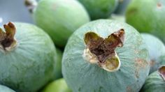The best ways to use your bumper feijoa crop