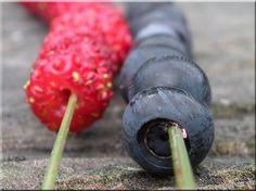 Smultron & blåbär på strå. - This is how children in Sweden collect Alpine strawberries and blueberries ...