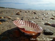 "Poster 75x50cm réalisé à partir d'une photographie de Céline Photos Art Nature "" Invitation de la mer "" : Photos par celinephotosartnature Celine, Invitation, Nature, Dimensions, Photos, Posters, The Sea, Photography, Sea Shells"