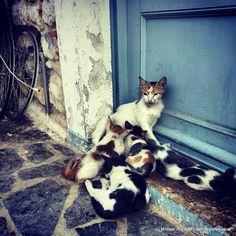 MIAU | War wohl klar - Klischees müssen auch bedient werden... Greece Travel, Boston Terrier, Cats, Animals, Gatos, Animais, Animales, Animaux, Greece Vacation