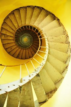 caracol amarillo