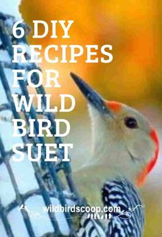 Bird suet recipes will allow you to be creative. Find out how to make suet and what suet feeders to use to feed wild birds. Baby Bird Food, Wild Bird Food, Suet Bird Feeder, Humming Bird Feeders, Suet Recipe, Suet Cakes, Wild Birds Unlimited, Bird Feeding Station, What Is A Bird