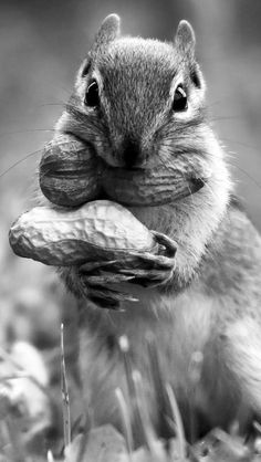 Collecting nuts