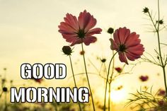 Good Morning Images – Today I am Share With You Latest Free New Good Morning Images , HD Good Morning Photo Pictures , Top Good Morning Images Best Good Morning Images For Whatsaap & Facebook . Good Morning In Hindi, Latest Good Morning Images, Good Morning Photos, Morning Pictures, Good Morning Wishes, Wallpaper Pictures, Photo Wallpaper, Pictures Images, Good Morning Wallpaper